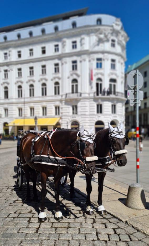 Vienna vibe
